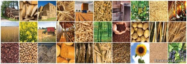 Какой вид биотоплива лучше использовать?